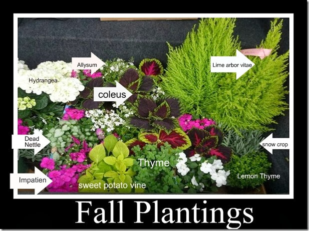 Fall plantings a  ribbit