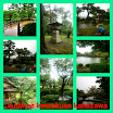 collage_20140809191150638.jpg