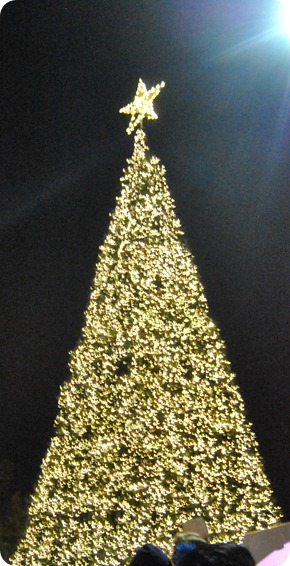 Plano Christmas Tree Lighting 2012 039