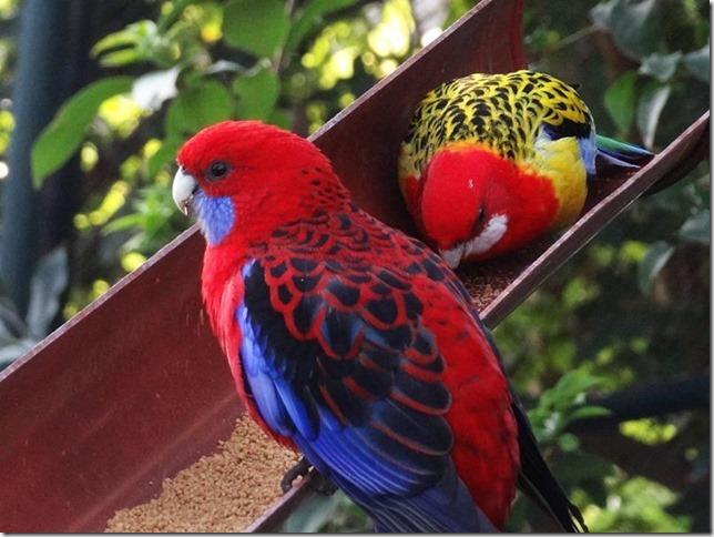 Santiago_Zoo_DSC03812