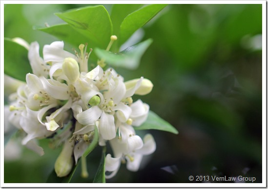 Flower_Bridal_1_10213_IMG_6872