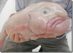一番醜い魚