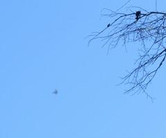 F35 Raptor just seconds after takeoff