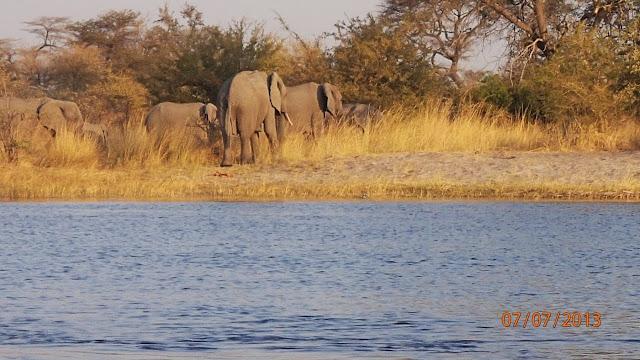 Kwando River 049.JPG