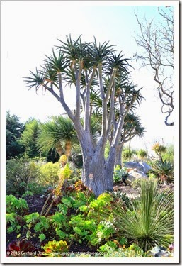 150323_Carpinteria_SeasideGardens_0048