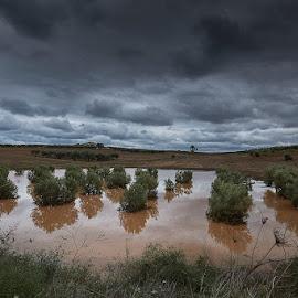 Sani Olive Tree Fields by Fokion Zissiadis - Landscapes Prairies, Meadows & Fields