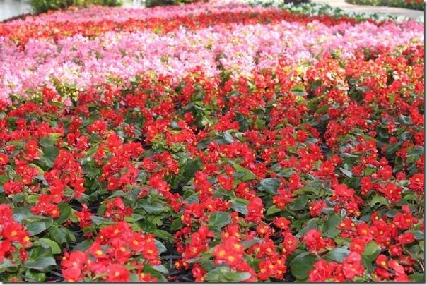 台南公園-2012百花祭15