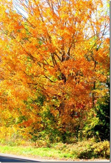 Leaves (480x640)