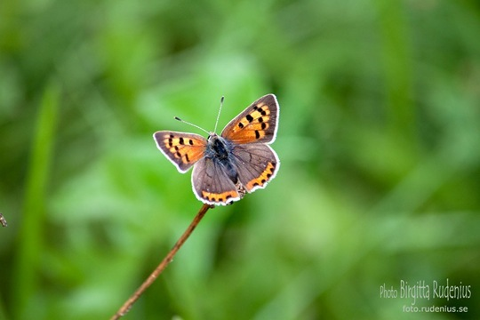 butterfly_20110730_brown2