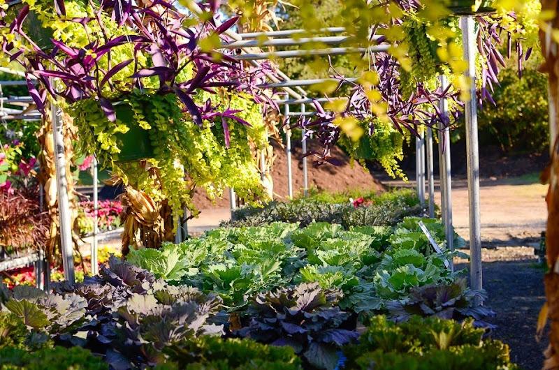 dixie lee garden center-15622