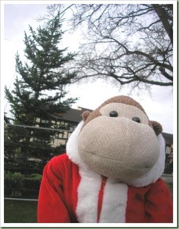 Bilbrook Christmas Tree 5