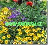 DSC03637.JPG-Gula-lila-rda-blommor-1