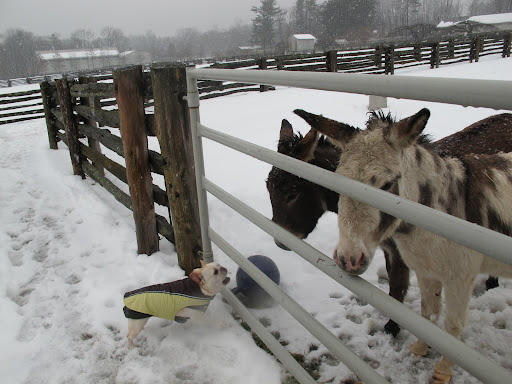 Well, you donkeys must have a strong constitution to be able to stay out here all day long!13