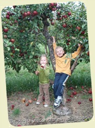 apple-picking_thumb31