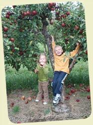 apple-picking_thumb31