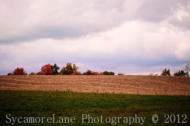 Gray autumn day-1