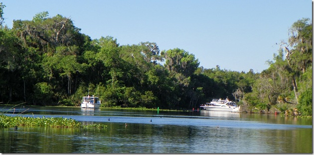 St Johns River 057cs