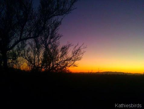 7. Sunset in Saguaro NP 1-14-14-kab