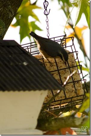 Birds-2010
