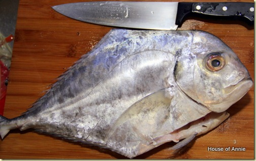 Threadfin Trevally - African Pompano