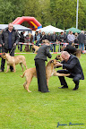 20100513-Bullmastiff-Clubmatch_31059.jpg
