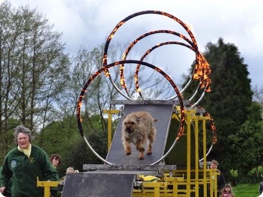 Whitchurch Dog Display Team