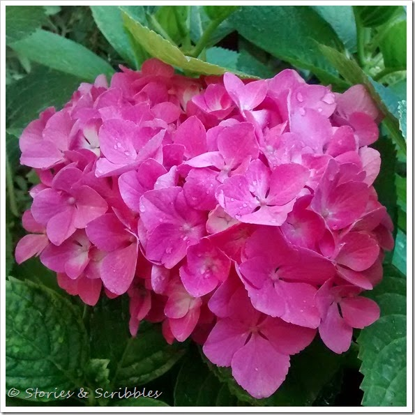 My flowers (3)