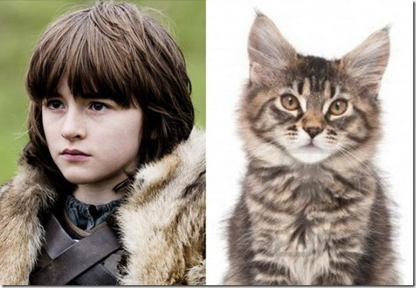 cats-game-thrones-13