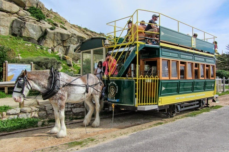 victor-harbor-horse-trams-2