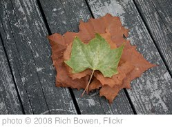 'Fall Leaves' photo (c) 2008, Rich Bowen - license: http://creativecommons.org/licenses/by/2.0/