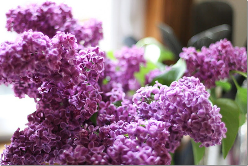 lovely lilacs-1-blog