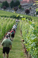Walking through vineyards