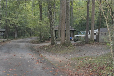 wooded campsites