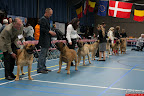 20130510-Bullmastiff-Worldcup-0216.jpg