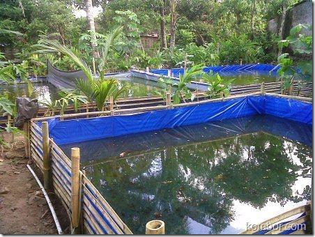 kolam terpal lele 02