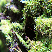 Moss on the Coomera Circuit