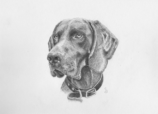 dog drawing tim smith