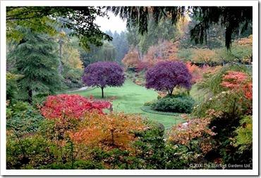 jardins floridos