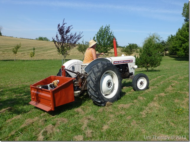 Uni Therapy: Mum on a tractor