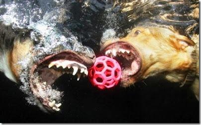 perros bajo el agua (3)