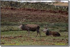 Bradgate Park D800  01-01-2013 12-21-21