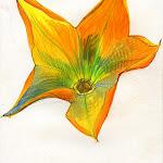 openflower1.jpg