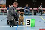 20130511-BMCN-Bullmastiff-Championship-Clubmatch-1547.jpg