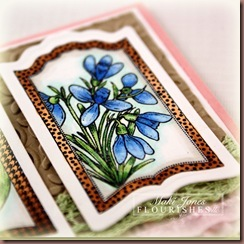 Botanical-Bookplate_1-4_edi