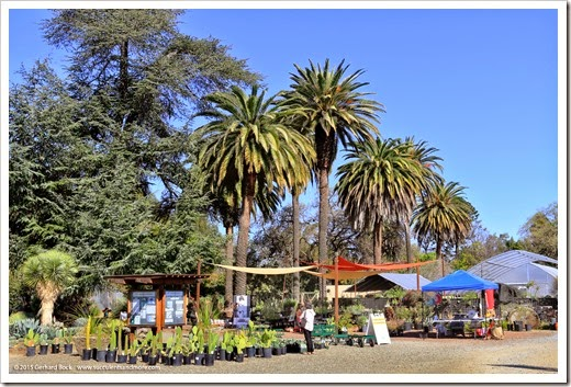 Expanded retail nursery at the Ruth Bancroft Garden