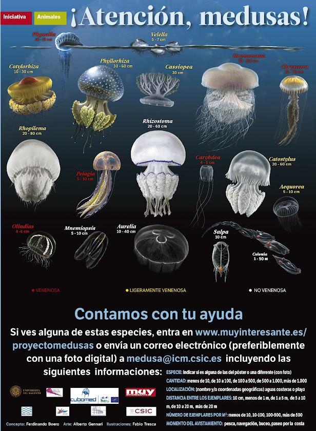 Identificar medusas