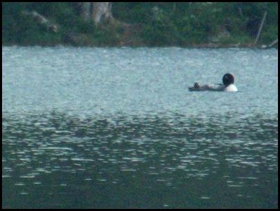 Lowell Lake #2 011 (36)
