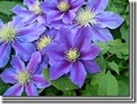 clip_image02452