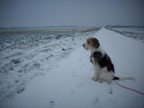 Puca im Schnee 004_800x600