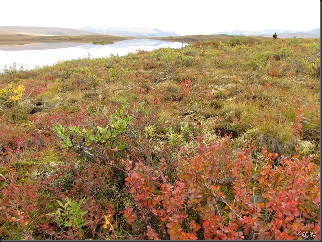 Colour on the Tundra